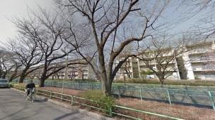 330-toei-kamishakujii-apartments-man-on-bike-row-of-trees